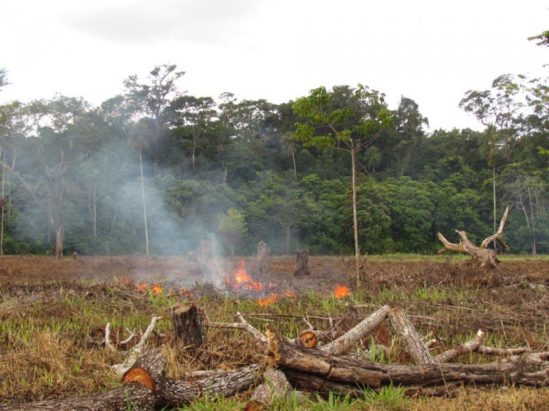 media/image/regenwaldzerstoerung-gua-lacandon-brandrodung-la-lucha-09-2012-lr-6.jpg